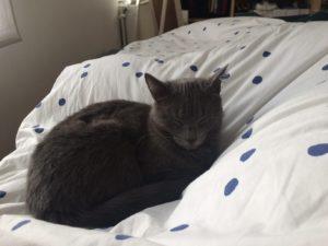 Chat réveil lit après opération des yeux myopie au laser