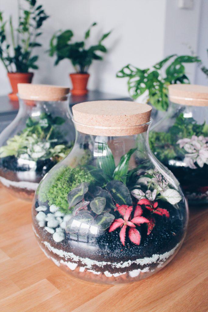 Terrarium 5 plantes vertes environnement fermé tutoriel diy sur le blog laualamenthe.com