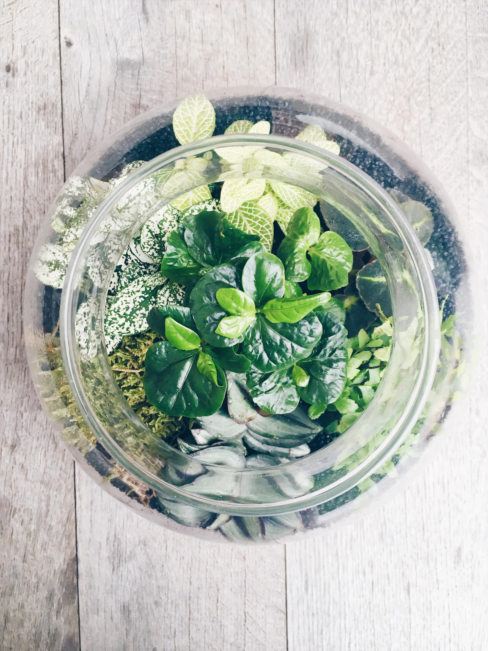 Terrarium Fermé Plante Grasse terrarium : comment le réaliser soi-même ? tutoriel | lau à