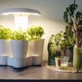 Test et découverte du potager d'intérieur : Calla Garden sur le blog laualamenthe.com